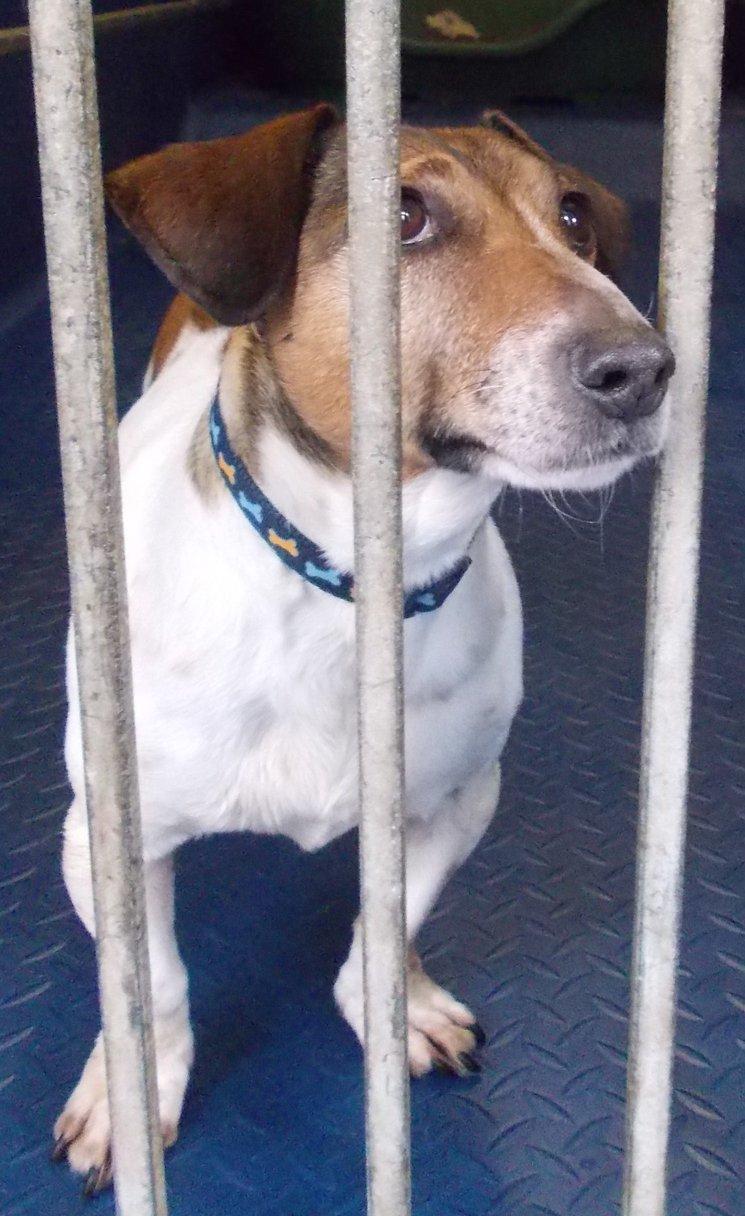 Dog Rescue Centre Derry